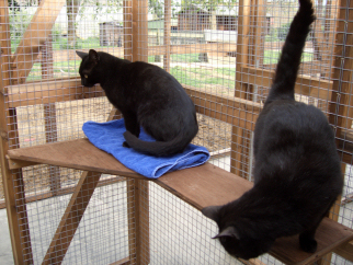 Cats at home at Radmore Farm Cattery